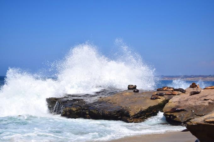 La Jolla sea lions - feature